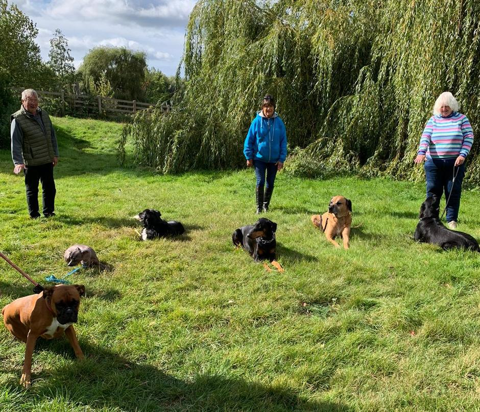 Dog training by the river at imber court
